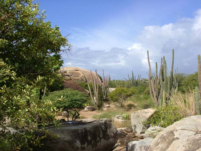 Explore The Beauty Of Caribbean: Aruba's Arikok National Park
